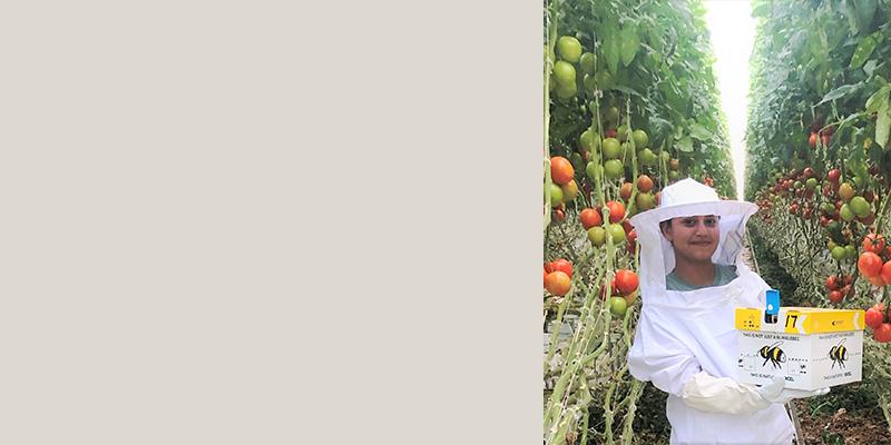 Get the 'Buzz' On Village Farms'  <br /> IPM Program!